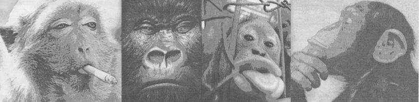 monkeycomp3